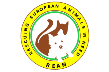 Help secure dogs in Romania