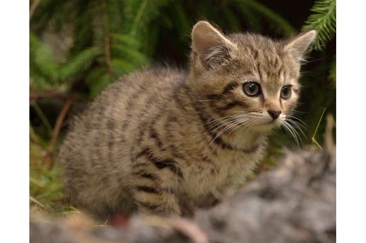 Wildcat Haven CIC