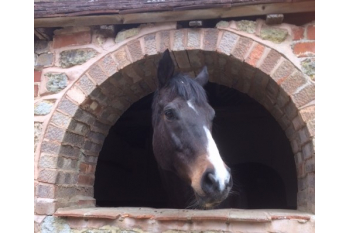 The Racehorse Sanctuary General Appeal for Support