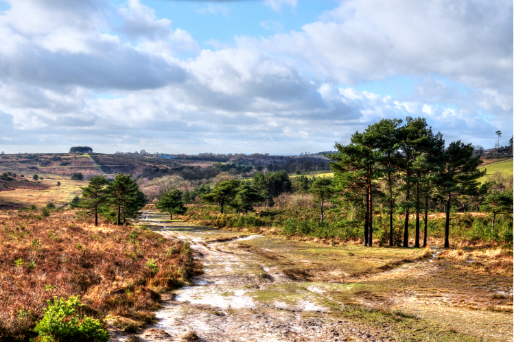 The Conservators of Ashdown Forest