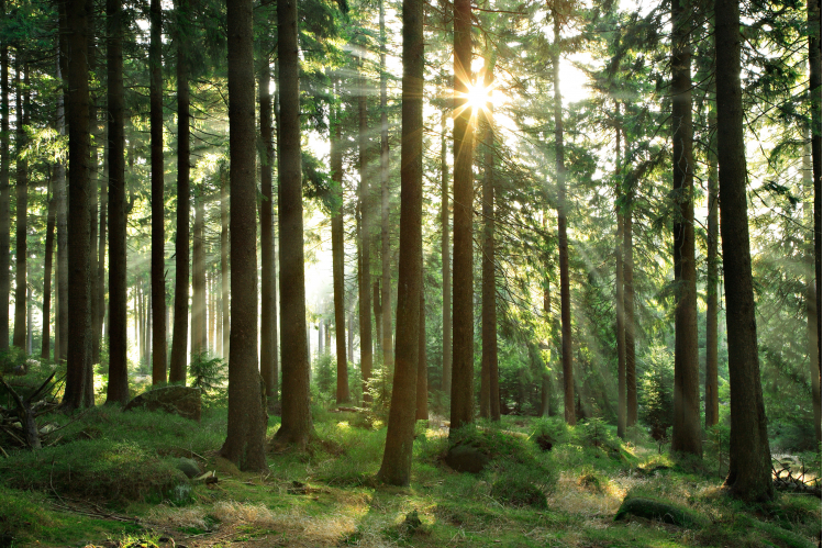 Environmental Investigation Agency UK