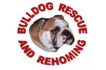 Bulldog Rescue & Rehoming Vet Bill assistance