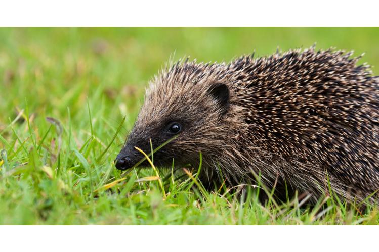 The Lancashire Wildlife Trust