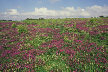 East Sussex National Nature Reserves Habitat Recovery