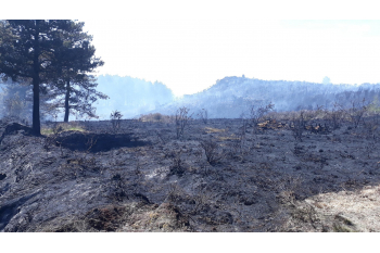 Help Wareham Forest Appeal