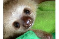 Panda & Sloth Zoo (Test)