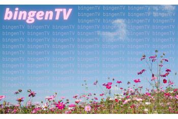 bingenTV