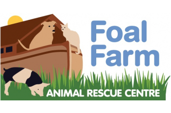 Donate to Foal Farm