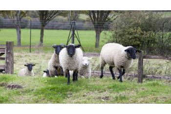 Hainault Forest - Foxburrow Farm