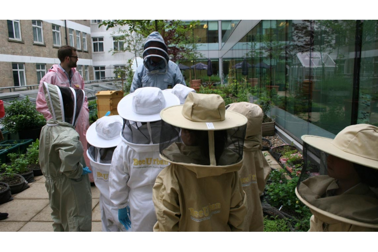 The Bee Friendly Trust