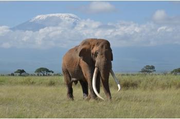 Poaching, Pesticides & Politics